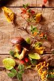 Cosecha del bosque del otoño o de la caída Imágenes de archivo libres de regalías