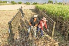 Cosecha del campo de la caña de azúcar, provincia de Tay Ninh, Vietnam Fotografía de archivo libre de regalías