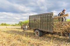 Cosecha del campo de la caña de azúcar, provincia de Tay Ninh, Vietnam Imágenes de archivo libres de regalías