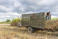Cosecha del campo de la caña de azúcar, provincia de Tay Ninh, Vietnam Foto de archivo libre de regalías