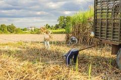 Cosecha del campo de la caña de azúcar, provincia de Tay Ninh, Vietnam Fotografía de archivo