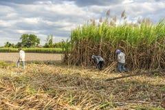 Cosecha del campo de la caña de azúcar, provincia de Tay Ninh, Vietnam Imagen de archivo