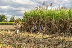Cosecha del campo de la caña de azúcar, provincia de Tay Ninh, Vietnam Foto de archivo