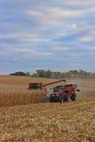 Cosecha del campo de maíz Foto de archivo libre de regalías