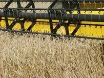 Cosecha del campo de trigo Foto de archivo libre de regalías