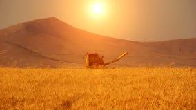 Cosecha del campo de trigo metrajes