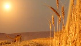 Cosecha del campo de trigo almacen de metraje de vídeo