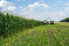 Cosecha del ensilaje jugoso del maíz por una máquina segadora y un transporte en camiones, para poner en el pienso fotos de archivo