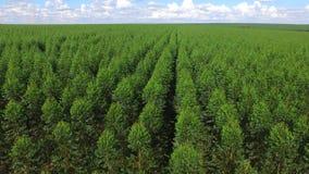 Cosecha del eucalipto en el día soleado - visión aérea en el Brasil almacen de metraje de vídeo