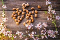 Cosecha del flor de la primavera de la almendra en la madera fotografía de archivo libre de regalías