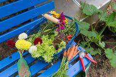 Cosecha del jardín vegetal Imagen de archivo libre de regalías