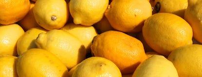 Cosecha del limón imágenes de archivo libres de regalías