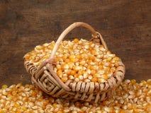 Cosecha del maíz Imagenes de archivo