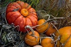 Cosecha del otoño Fotografía de archivo