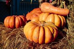 cosecha del otoño, calabazas para Halloween Fotografía de archivo