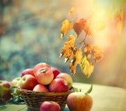 Cosecha del otoño, comida sana, manzana sana en cesta de mimbre en la tabla foto de archivo libre de regalías