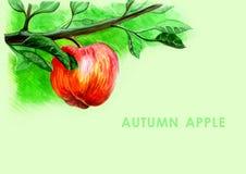 Cosecha del otoño de frutas ilustración del vector