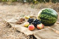 Cosecha del otoño de verduras y de frutas Día de la acción de gracias Fotos de archivo libres de regalías