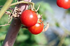 Cosecha del otoño de verduras y del primer de las frutas imagenes de archivo