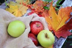 Cosecha del otoño - un bolso con las manzanas y las hojas Fotos de archivo