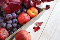 Cosecha del otoño: uvas rojas y manzanas en una bandeja gris Fotos de archivo libres de regalías