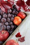 Cosecha del otoño: uvas rojas y manzanas en una bandeja gris Foto de archivo libre de regalías