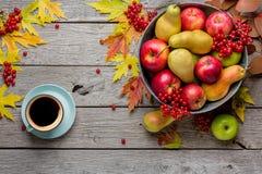Cosecha del otoño y fondo de la tarjeta de la acción de gracias Imágenes de archivo libres de regalías