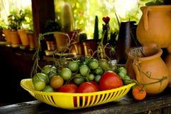Cosecha del tomate Imagen de archivo libre de regalías