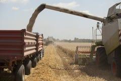 Cosecha del trigo Foto de archivo libre de regalías