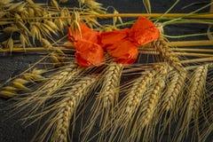 Cosecha del trigo de invierno y de la amapola roja del chisme imagenes de archivo