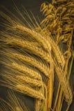Cosecha del trigo de invierno y de la amapola roja del chisme foto de archivo
