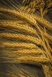 Cosecha del trigo de invierno y de la amapola roja del chisme imágenes de archivo libres de regalías