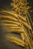 Cosecha del trigo de invierno y de la amapola roja del chisme imagen de archivo libre de regalías