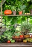 Cosecha del verano en el jardín con las verduras y las frutas Fotos de archivo