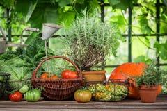 Cosecha del verano en el jardín por completo de verduras y de frutas Imagen de archivo libre de regalías