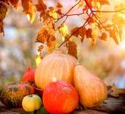 Cosecha en la tabla, acción de gracias, fruta y verdura orgánica estacional del otoño imagen de archivo libre de regalías