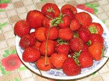 Cosecha fresca de fresas maduras Imagen de archivo libre de regalías