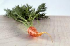 Cosecha fresca de la zanahoria de bebé Fotografía de archivo