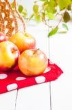 Cosecha fresca de manzanas Concepto de la fruta de la naturaleza Fotografía de archivo libre de regalías