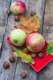 Cosecha madura, dulce del otoño de la manzana Fotos de archivo libres de regalías