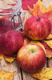 Cosecha madura, dulce del otoño de la manzana Imagenes de archivo