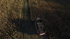 Cosecha mecanizada de la visión aérea en el campo de maíz metrajes