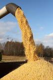 Cosecha mecanizada una cosecha del maíz Imagenes de archivo