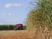 Cosecha Sugar Cane Fotografía de archivo libre de regalías
