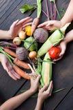 Cosecha vegetal de la granja del otoño, comida fresca cruda imagen de archivo libre de regalías