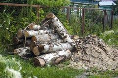 Cosechado en madera de abedul del invierno Fotografía de archivo libre de regalías