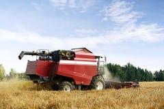 Cosechadora de cosecha roja que trabaja en un campo de trigo Imágenes de archivo libres de regalías