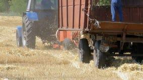 Cosechadora de la cosecha del trigo que descarga trigo en un tractor remolque durante cosecha metrajes