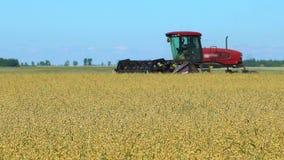 Cosechadora que recoge cosechas Cosecha del trigo, máquinas segadores que trabajan en la avena, trigo, campo del centeno, campo d almacen de video