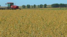 Cosechadora que recoge cosechas Cosecha del trigo, máquinas segadores que trabajan en la avena, trigo, campo del centeno, campo d almacen de metraje de vídeo